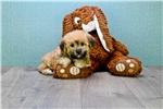 Picture of Jason, www.premierpups.com