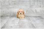 Picture of TOY ZETA, WWW.PREMIERPUPS.COM