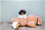 Picture of TOY Helen, WWW.PREMIERPUPS.COM
