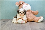 Picture of Michael, WWW.PREMIERPUPS.COM