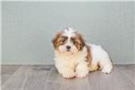 Picture of Tina, WWW.PREMIERPUPS.COM