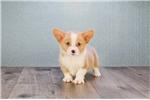 Picture of EVAN, WWW.PREMIERPUPS.COM