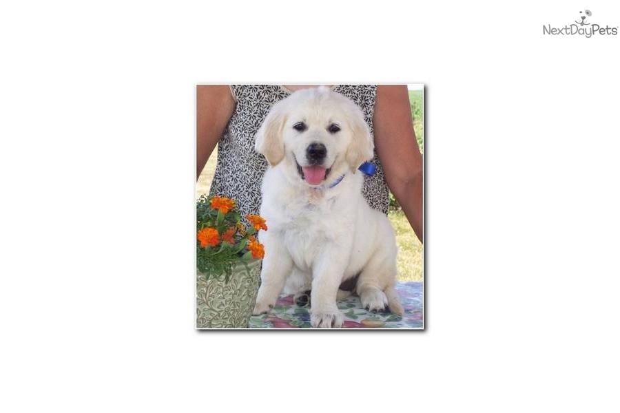 Findlay Dog Training