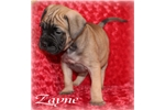 Picture of Zayne
