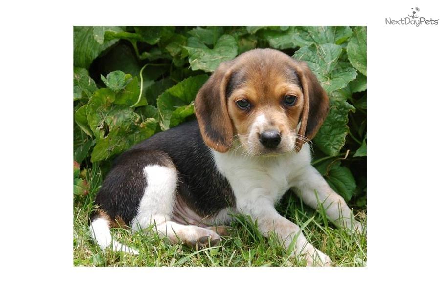 Akc Registered Dog Name Generator