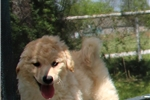 Picture of MINI