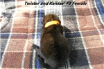 Picture of Twister and Kansas's #3 Female