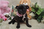 Picture of Olive...Sweet Frenchton!