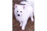 Picture of Kingston - mini