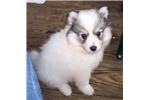 Picture of Snickers   Huskimo