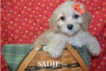 Picture of $1600 Sadie fixed + CHIPPED www.KingdomDogs.com