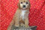 Picture of $1500 LEONARD + CHIPPED www.KingdomDogs.com