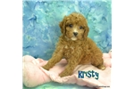 Picture of $1600 Kristy Spayed-Chipped www.KingdomDogs.com