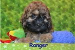 Picture of $1500 RANGER fixed + CHIPPED www.KingdomDogs.com