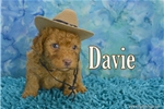 Picture of $1600 Davie neutered and Microchipped