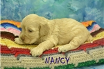 Picture of NANCY $1200 SPAYED & Microchipped
