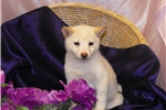Picture of ~~BABY BELLE~~  WHAT A HAPPY LITTLE ONE!!