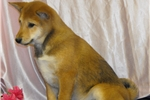 Picture of ~~LOVING BABY LINDY~~  WHAT LITTLE SWEETHEART!!