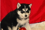 Picture of ~~BABY JAX~~ WHAT A LOVING BABY BOY!!