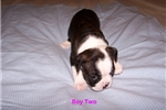 Picture of  K S Bulldogs Facebook $850.00. Check me out!