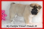Picture of *AKC Mighty Oak* Friend 19 *CH Sired*