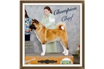 Picture of AKC Sweetie Pie! Akita Friend 2  *CH sired Baby*