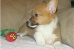 Picture of Sweet, well socialized, healthy,baby !!