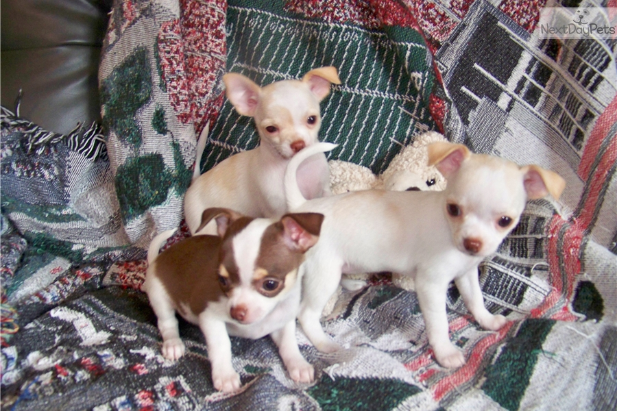 Trained Dogs For Sale Knoxville Tn