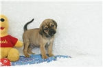 Picture of Shadow, Puggle, Shipping Included
