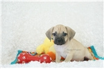 Picture of Rowland, Playful Puggle, Shipping Included