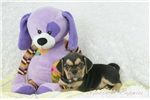 Picture of Nate 2nd Generation Puggle Shipping Included