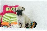Picture of Ella female Pugglebull