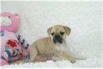 Picture of Minnie female Pugglebull