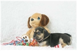 Picture of Grover 2nd Generation Puggle Shipping Included