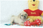 Picture of Russ 2nd Generation Puggle Shipping Included