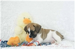 Picture of Otto Pugglebull Shipping Included