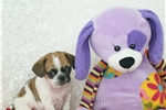 Picture of Zippy, 2nd generation puggle, shipping included