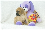Picture of Duffy, Puggle, Shipping Included