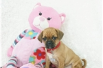Picture of Rosie, 2nd generation puggle, shipping included