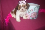 Picture of GORGEOUS FEMALE .....JANGLES