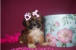 Picture of GORGEOUS FEMALE ........JANGLES