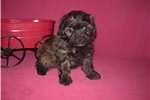Picture of GORGEOUS MALE .......BENTLEY