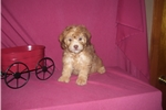 Picture of GORGEOUS MALE...TEDDY