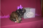 Picture of GORGEOUS FEMALE .......BELLA