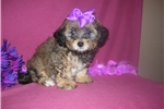 Picture of GORGEOUS FEMALE .....PRINCESS