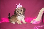 Picture of BEAUTIFUL FEMALE.......GRACIE