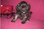 Picture of GORGEOUS MALE .....GIZMO