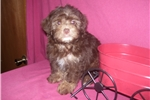 Picture of GORGEOUS MALE .......GIZMO