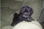 Picture of GORGEOUS MALE .......BLACKIE