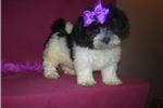Picture of GORGEOUS FEMALE .......STARLA